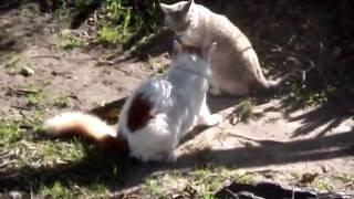 cat wrestling championships