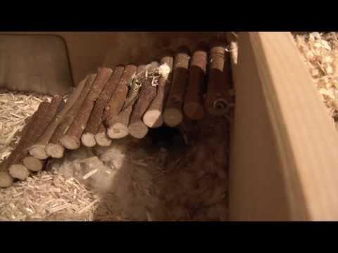Ob die Eier der Würmer auf dem Frost umkommen