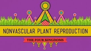 The Lives of Nonvascular Plants: Alternation of Generations - Crash Course Biology #36
