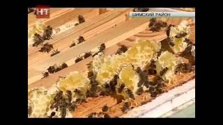 Шимский пчеловод Александр Чумаков планирует расширить медоносную базу до производственных масштабов