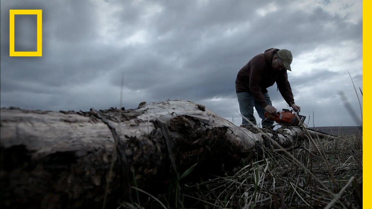 Wood Yearning  Life Below Zero thumbnail