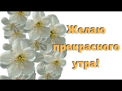 С Добрым утром! С успешным днем! С хорошим настроением! Красивые поздравления от души
