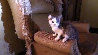 Смотреть онлайн Ловят 40+ кошек в заброшенном доме