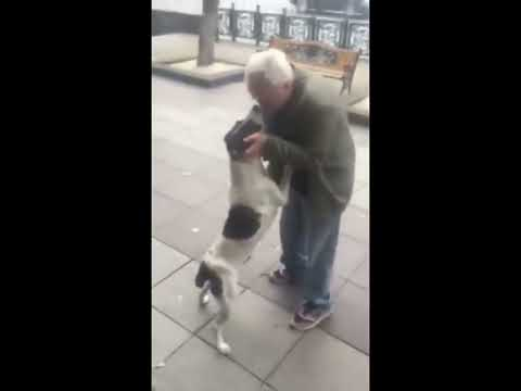 Man finds his dog in the streets of Tbilisi (Georgia) three years after he lost it.