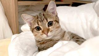 子猫と一緒に寝た日の朝は決まってこうなります…!