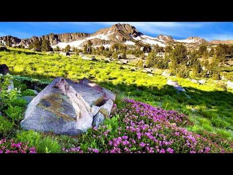 Winter mountain flowers (HD1080p)