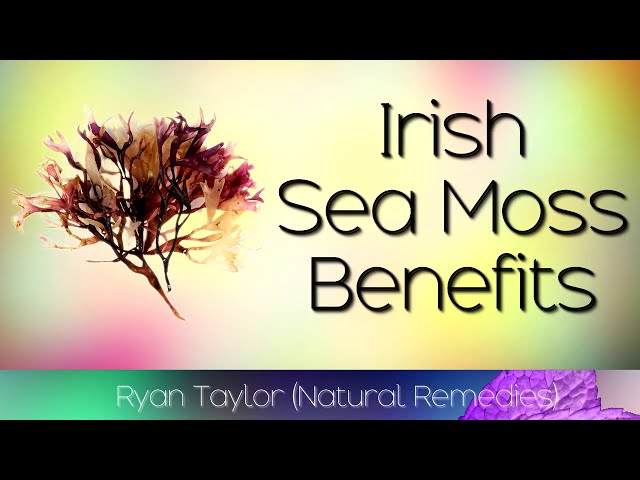 How To Build A Sea Moss Benefits You Can Be Proud Of Sea Moss Benefits For Skin