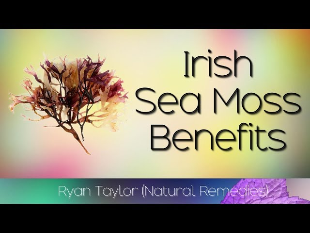 10 Things We All Hate About Sea Moss Benefits Sea Moss Benefits For Hair