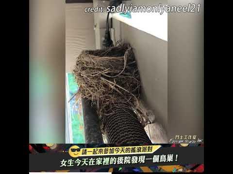 在家裡的後院發現一個鳥巢