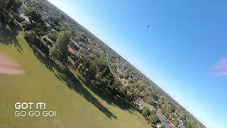 FPV Quad Wing Chase - Pine Rivers QLD - IMPULSERC APEX HD - DJI FPV GOGGLE FEED 720p 120fps