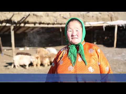 Climate change affects the migration of Mongolian herders
