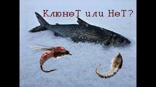 Мухи для рыбалки на кольском полуострове