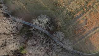 ????Diving tree holes practice????   ????Fpv freestyle ????