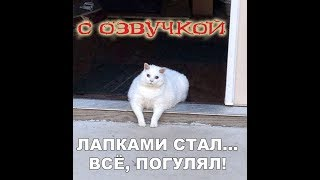 Приколы с котами - СМЕШНАЯ ОЗВУЧКА ЖИВОТНЫХ – ДЕНЬ ПУКОВ кота Мурзика - DOMI SHOW
