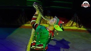 Московский цирк зверей на арене в Сочи