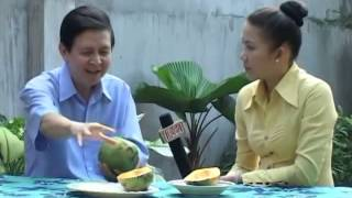 Đu Đủ Tác Dụng Chữa Bệnh Của Đu Đủ Carica Papaya