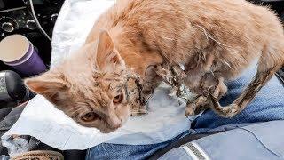 Котенок радуется что его нашли и забрали с улицы Поступайте по человечески Смотреть всем