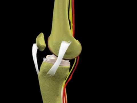 Ejercicios que le ayudará a deshacerse del dolor de espalda