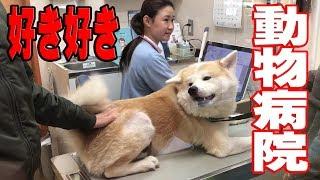 秋田犬好き好き女医さん動物病院ワンダフルフル♪