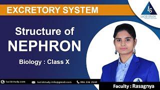 Structure of Nephron |Class X | Lucid Study | Best Online Education App - ONLINE
