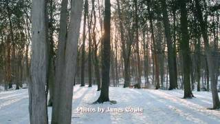 Winter - Falling into love - Kinsmen Dog Park