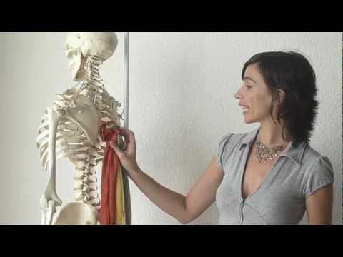 Arreglar la grasa de las rodillas del ejercicio del vídeo