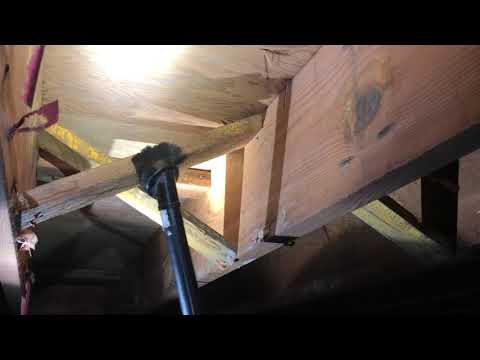 Mold All Over the Joists in Crawl Space in Spring Lake, NJ