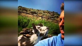 Угарные животные 2019 #18 Смешные видео про котов, угарные приколы до слёз, смешные животные 2019