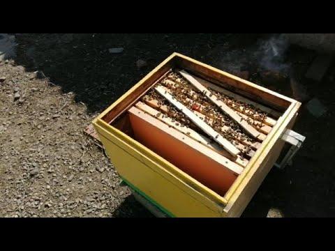 Помощь в развитии пчелосемьям весной и профилактика нозематоза.