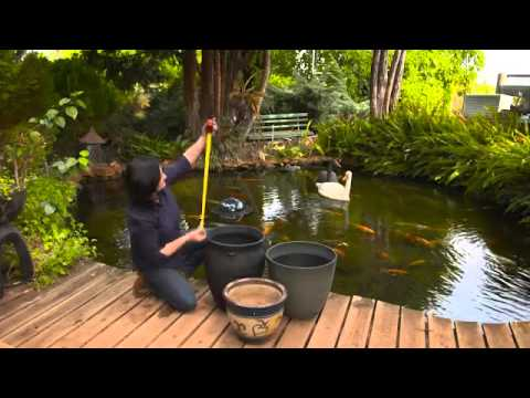 Selecting The Right Water Plant For Your Pond