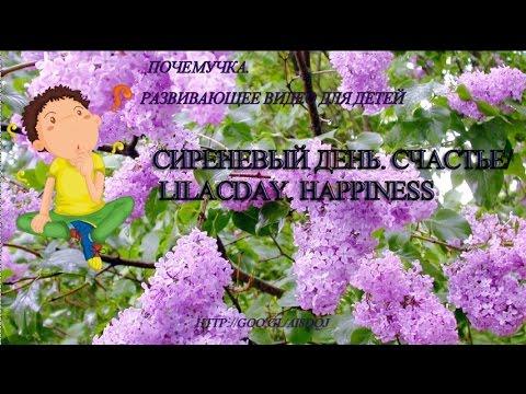 Что такое счастье стихи песни