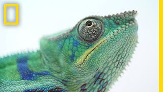 Chameleon Pi Old Worlds Best Of All