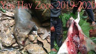 Hmong Movies  Yos hav zoov 2019-2020