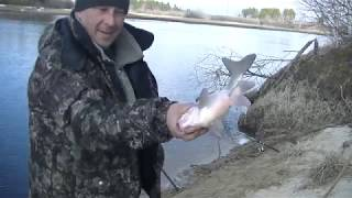 Открытие Летнего Сезона 2019 Удачная рыбалка на Фидер! Язь Пошёл!