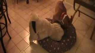 el perro loco ( crazy dog )
