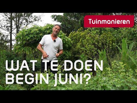 Wat te doen in de tuin begin juni?