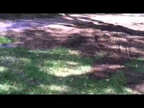 How To Establish A Lawn In Shade, Dealing With Tree Roots I Mp3