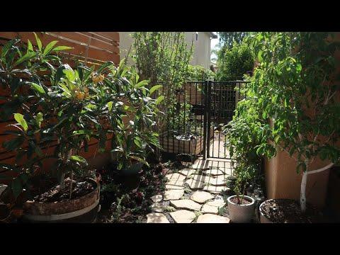 Backyard Urban Edible Garden Tour Spring 2019 // Food Forest / Container Gardening