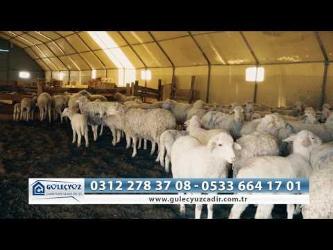 Çadır Da Koyun Olur Mu Diye Soranlara ? Güleçyüz Çadır Hayvan Barınakları