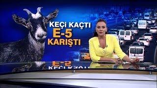 Kurbanlık keçi, E-5