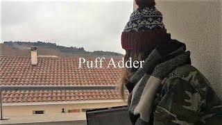 puff adder - original song