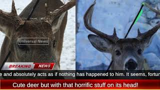 Is Carrot the cute deer alive after 1 big arrow pierced through it's head