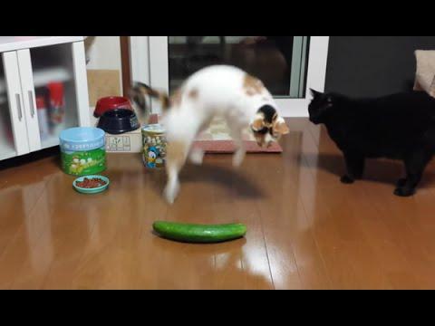 Filmulețe haioase cu pisici