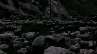 Горная река в Дагестане и стадо барашек