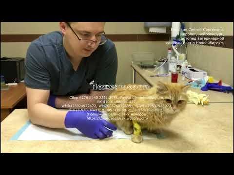 Новосибирцы пытаются спасти бездомную кошку Она может навсегда остаться инвалидом cat asks for help