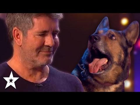 DOG Magician Makes Simon Cowell CRY On Britain's Got Talent 2019!   Got Talent Global (видео)