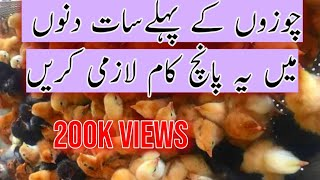 First seven days chicks care | How to care Day old Chicks