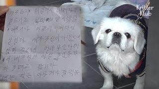 Shocking Letter Was Left Next To A Poor Dog Dumped On The Restroom (Part 1)   Kritter Klub