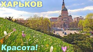 Соборный спуск и террасный сквер ▶ Весенний Харьков