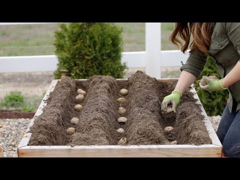 , title : 'How to Plant Potatoes! 🥔🌿 // Garden Answer
